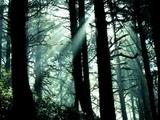 Le chant des  druides